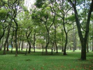 Trees within La Sabana Park.